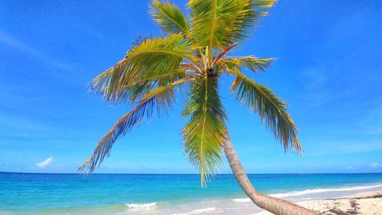 Beach at RIU Resort in Punta Cana, Arena Gorda Beach