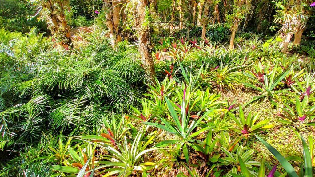 Scape Park Cap Cana, a tropical theme park in Punta Cana